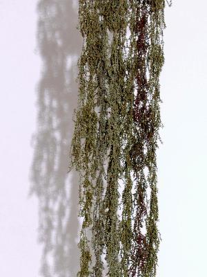 Cascadia, 2007