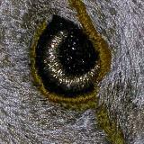 Of Eyes